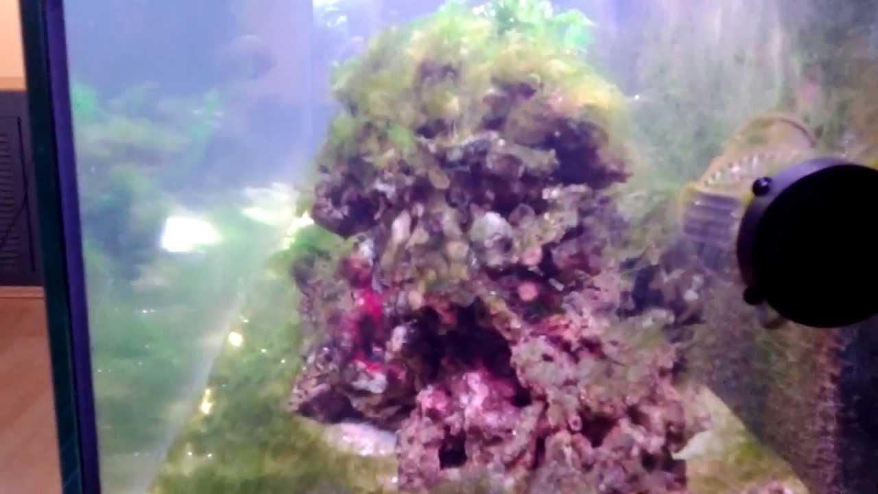 meerwasser aquarium einlaufphase fadenalgen youtube. Black Bedroom Furniture Sets. Home Design Ideas