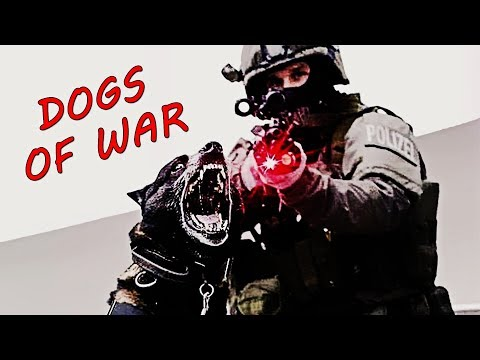 Military Dogs Training - K9 | Tribute
