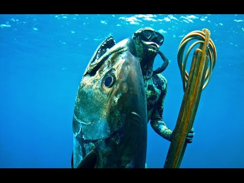 Spearfishing Big Doggy Tuna in Madagascar with Chris and Rob Allen - ITZTV One Fish