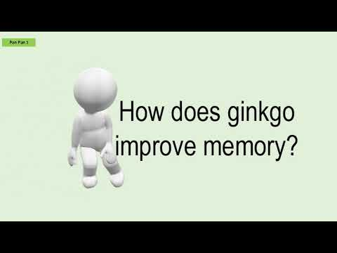 how-does-ginkgo-improve-memory?