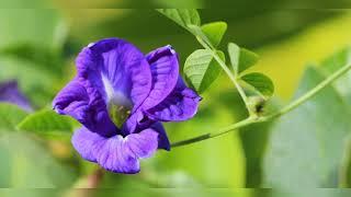 घर में सौभाग्य लाते हैं यह पौधे,plants are good for home,anvesha,s creativity