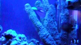 55 Gallon Saltwater Aquarium