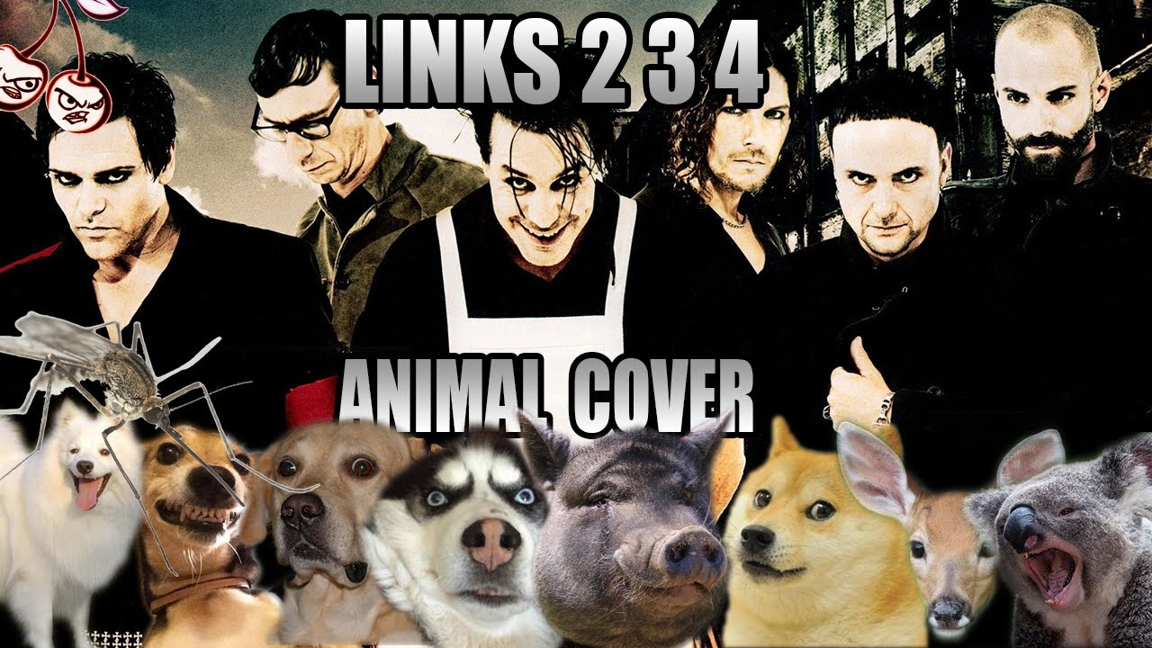 Rammstein - Links 2 3 4 (Animal Cover)