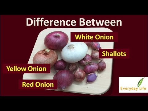 Onions| चुनिए सही प्याज | Yellow, Red, White Onion  and  Shallots | Types of Onions |  Everyday Life
