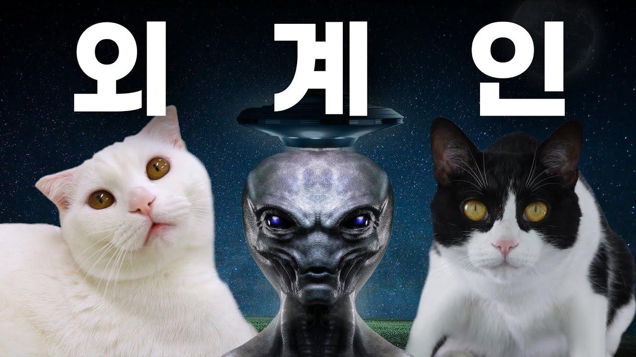 외계인을 처음 본 고양이의 반응은? ㅋㅋㅋ | 고양이산책