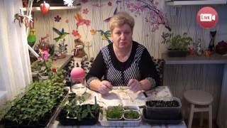 Персональный блог садовода и огородника Светланы Кацаповой 26 выпуск (про огурцы и не только)