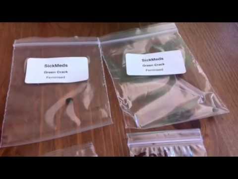 Single seed bank seeds
