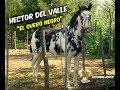 El Overo Negro | Hector del Valle