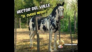 El Overo Negro   Hector del Valle.mp3