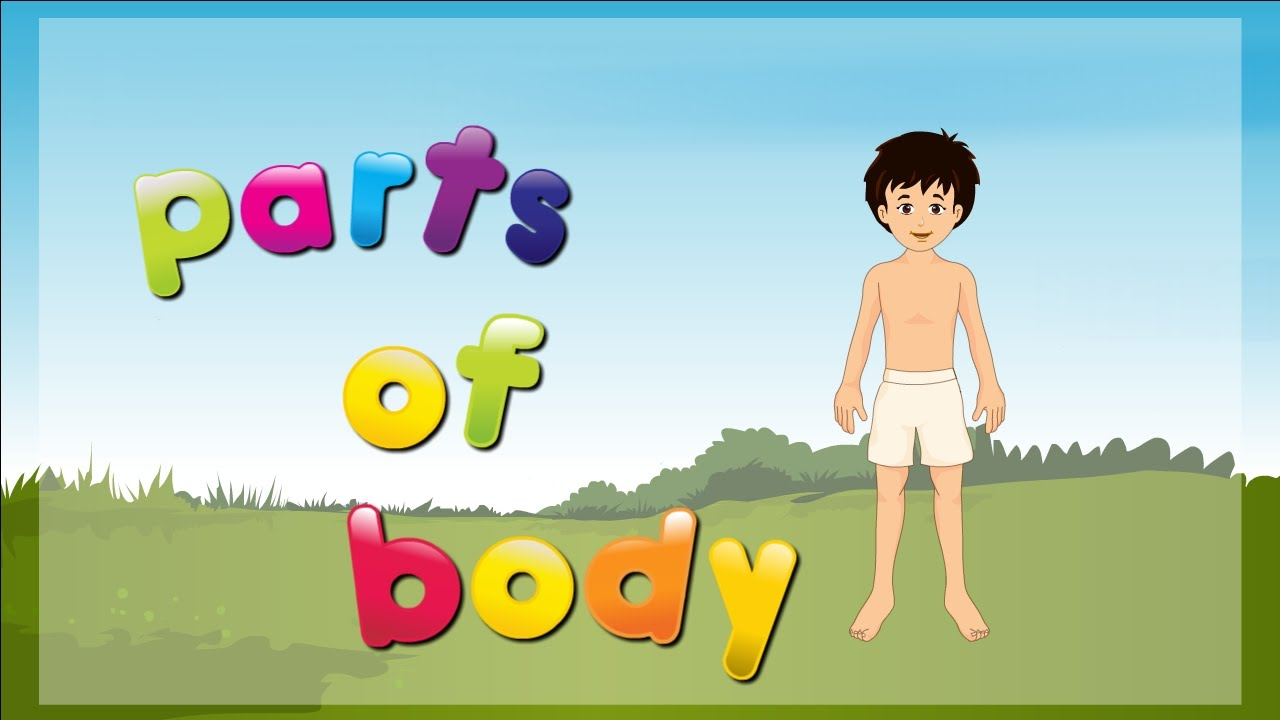 Parts Of Body For Kids Parts Of The Body Body Parts Name Youtube