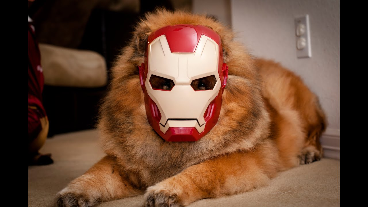 iron man 4 the invincible iron dog iron kid youtube. Black Bedroom Furniture Sets. Home Design Ideas