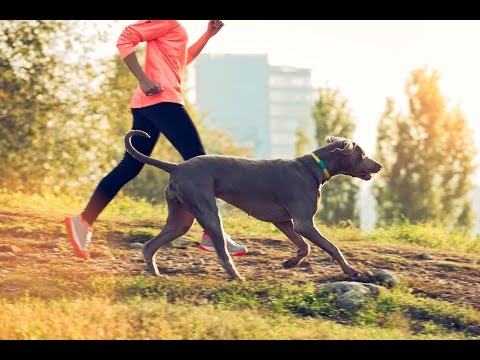 FitBark Dog Activity Monitor | Healthy Together