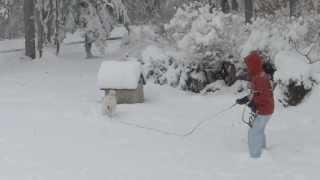 11月というのに20センチの積雪。喜ぶのは犬だけ?