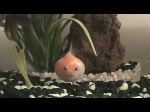 My Fat Fish