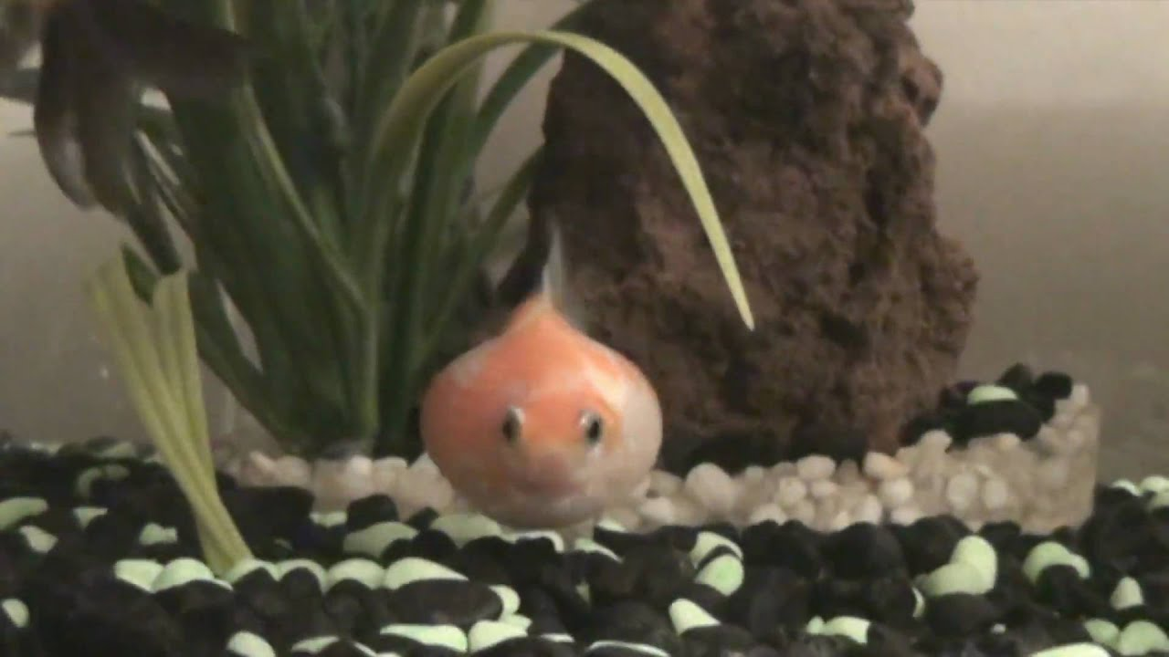 My fat fish youtube for What are fatty fish