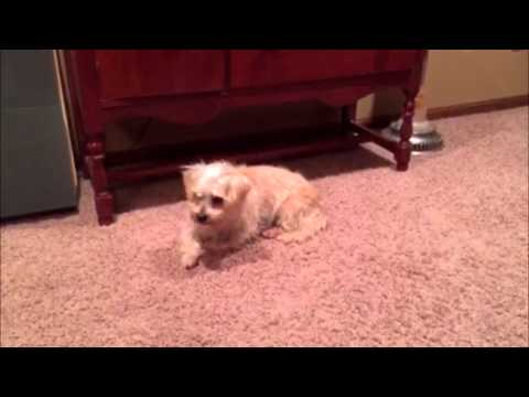 How to Entertain Your Bored Dog