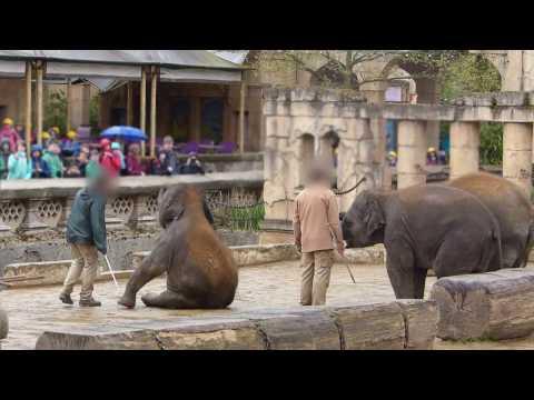 Hannover: Peta wirft Zoo Misshandlungen vor