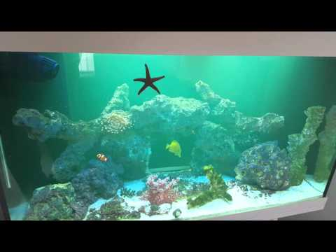 Whitespot treatment in marine tank