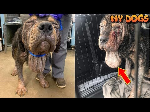 Rescue an Abandoned Dog in Horrific Condition Expected to Recover