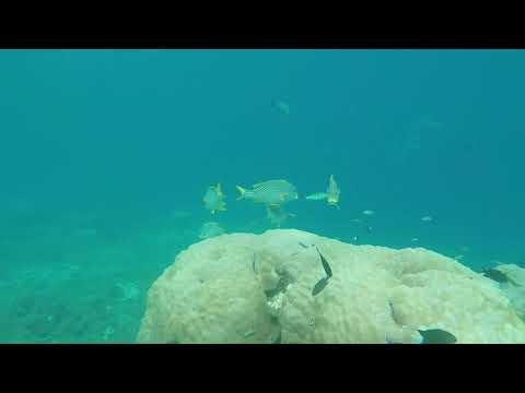 TREAD the globe  @ Scuba Junkie Sipadan Sabah Borneo Diving 2016