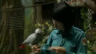 This parrot is no bird brain    chicagotribune com Mp3