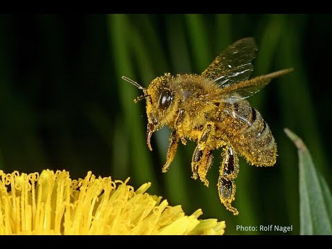 MD Pesticide Ban, TPP, NZ Beekeeper Woes & Grower Nixes Neonics