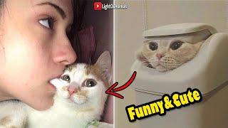 قطط مضحكة جداً - اضحك مع القطط حتي البكاء 😂 (جديد 2018)