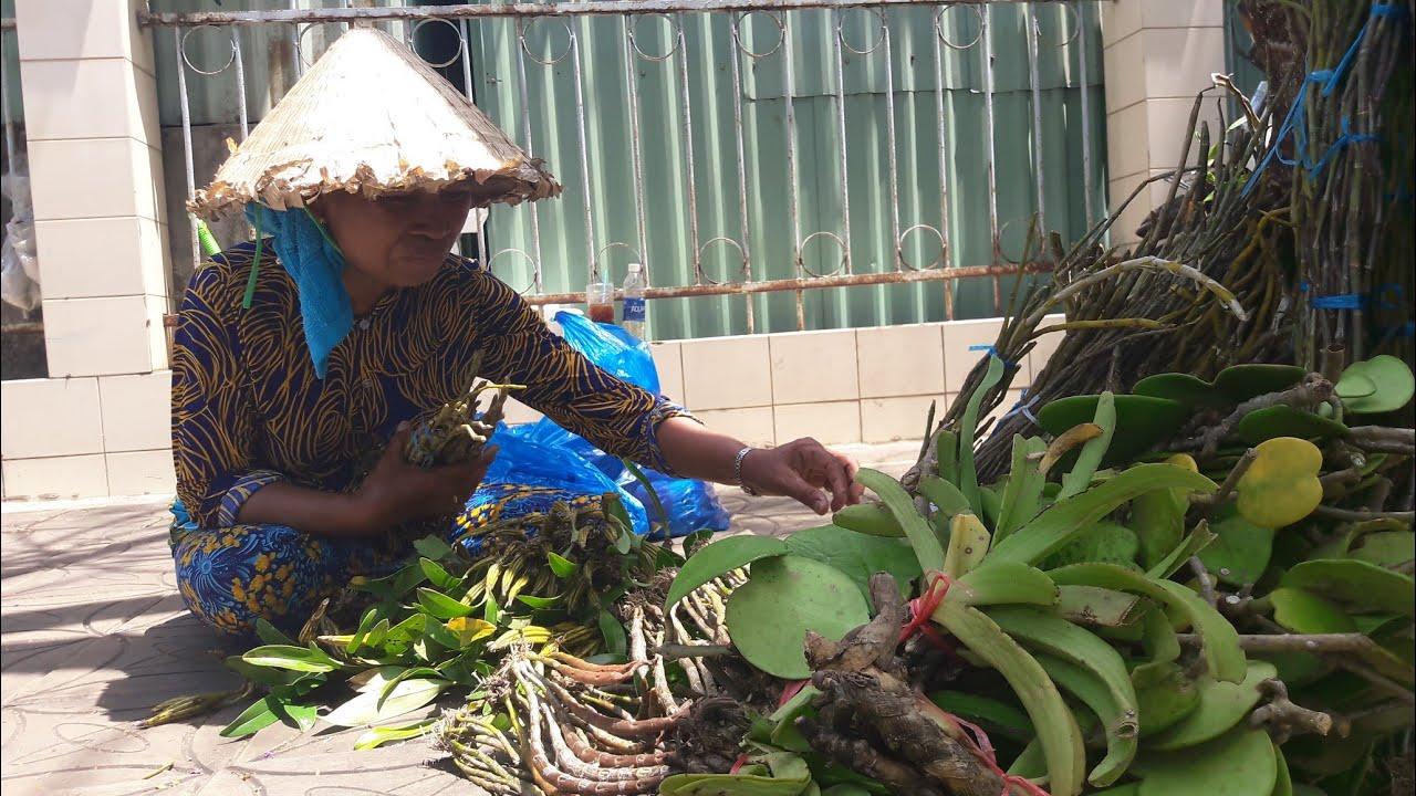 Bà cụ 20 năm bán Lan Rừng tại Công viên Lưu Hữu Phước Cần Thơ ll CS Cần Thơ HG