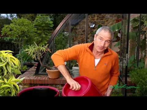Lechuza pots et jardini res avec syst me d 39 hydratation int gr jardinerie truffaut tv youtube - Truffaut jardiniere ...