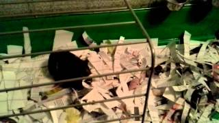 Свинки разговаривают(, 2015-02-01T18:40:16.000Z)