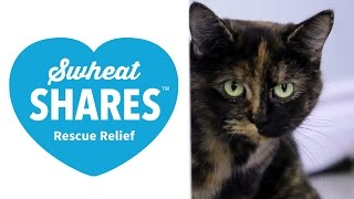 Swheat Shares ..and Adorable Cats & Kittens! (Clean My Space) Thumbnail