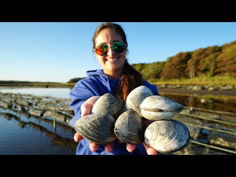 CLAMMING! CATCH CLEAN And COOK! Oyster Farm In Massachusetts!