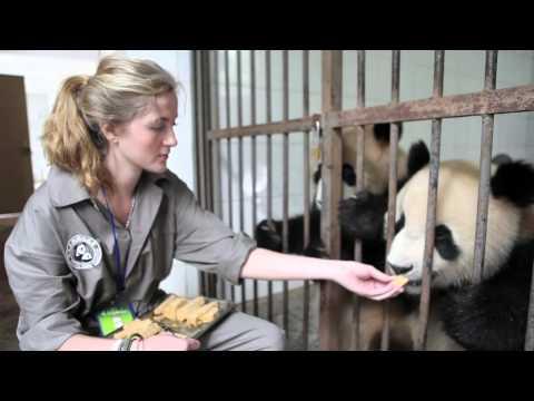 Panda Reserve - Jobstop
