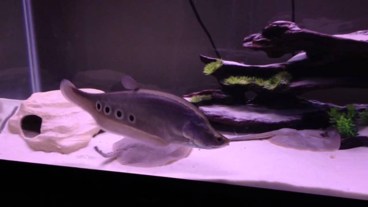 Aquarium fish tank sand - Freshwater White Sand Aquarium