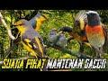 Suara Pikat Mantenan Gacor  Mp3 - Mp4 Download