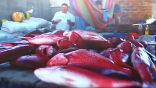De pesca en El Tamarindo