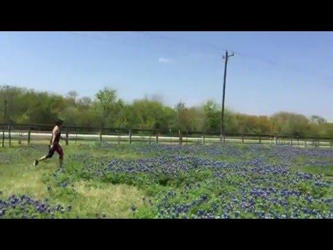Texas Bluebonnets Brenham Texas
