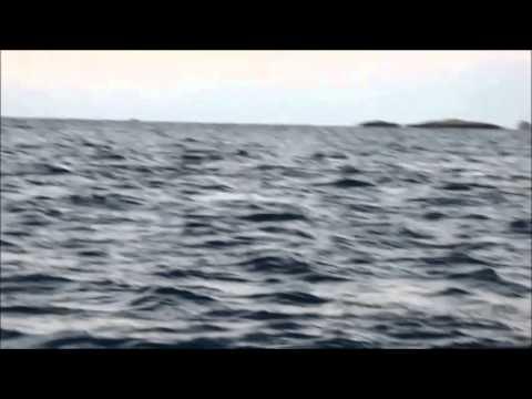 Волшебные песни горбатых китов