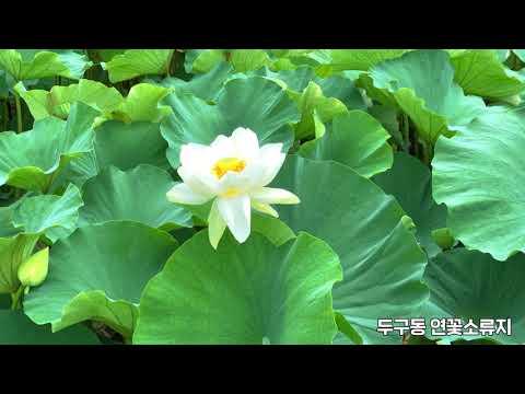 [금정 언택트 여행] 두구동 연꽃소류지 Thumbnail