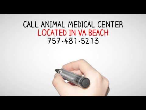 Dog Rabies Vaccination Virginia Beach Va