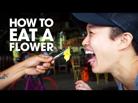 Exploring the Philippines: Bohol Bee Farm (How to eat a flower: VLOG 5)