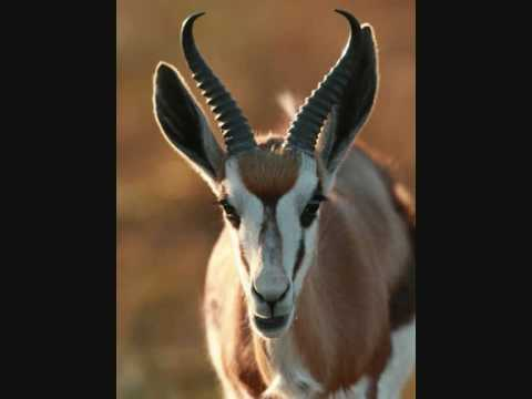 Shosholoza & Nkosi Sikeleli Afrika, Great songs  Springbok Emblem Is Here to Stay!!!