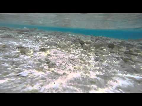 Sharks in Tuamotus archipelago (part I )