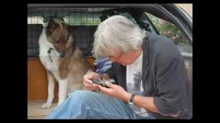 Alain Delon - Les chiens