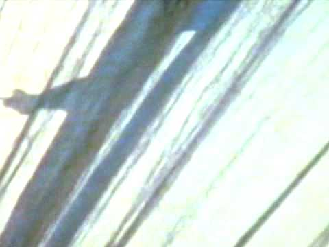 Multiplicidade 2009: Cao Guimarães + O Grivo