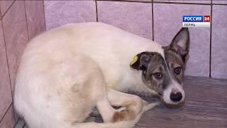 Специальный репортаж: пермские приюты для животных