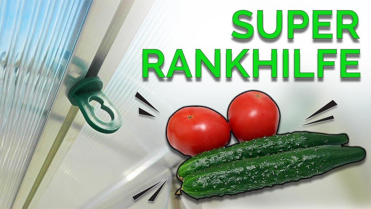 perfekte tomaten gurken rankhilfe die besten gew chshausclips youtube
