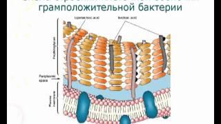 Основы микробиологии. Коротко и ясно. 3 курс.