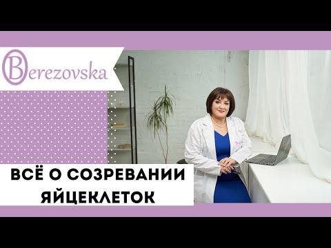 Все о созревании яйцеклеток и овуляции - Др.Елена Березовская