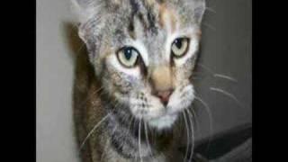 Lafayette Animal Control Adoptables